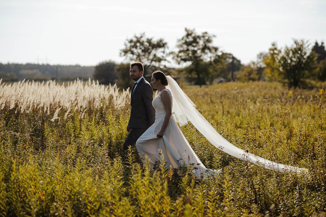 sesja ślubna na polu